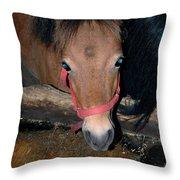 Blue Pony Eyes Throw Pillow