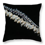 Blue Sawtooth Shrimp On Whip Coral Throw Pillow