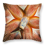 Blue-spotted Sea Urchin IIi Throw Pillow