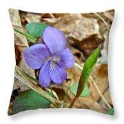 Blue Violet Wildflower - Viola Spp Throw Pillow