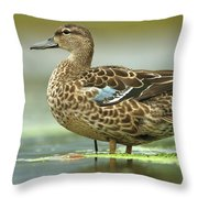 Blue-winged Teal Anas Discors Female Throw Pillow