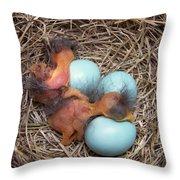 Bluebird Hatch Throw Pillow