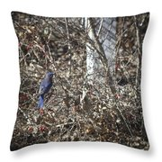 Bluebird In Barberries Squared Throw Pillow