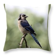 Bluejay - Bird Throw Pillow