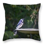 Bluejay In The Rain - Artist Cris Hayes Throw Pillow