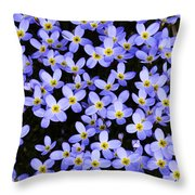 Bluets In Shade Throw Pillow