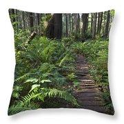 Boardwalk Winds Through The Forest Throw Pillow
