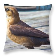 Boat Tail Grackle Throw Pillow