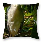 Blackcrowned Night Heron Throw Pillow