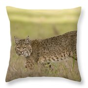 Bobcat Female Walking Santa Cruz Throw Pillow