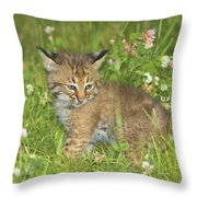 Bobcat Kitten Throw Pillow by John Pitcher