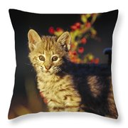Bobcat Kitten Standing On Log North Throw Pillow by Tim Fitzharris