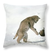 Bobcat Lynx Rufus Hunting Muskrat Throw Pillow