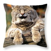 Bobcat Snoozes In The Sun Throw Pillow