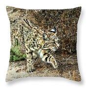 Bobcat Stalking Prey Throw Pillow