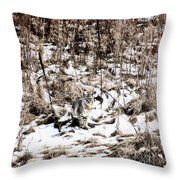 Bobcat Winter Throw Pillow