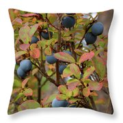Bog Bilberry Throw Pillow