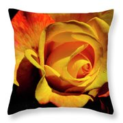 Bold Rose 2 Throw Pillow