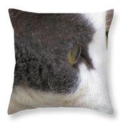 Boojer's Eye Throw Pillow