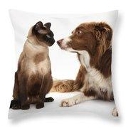 Border Collie & Siamese Cat Throw Pillow