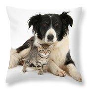 Border Collie And Kitten Throw Pillow