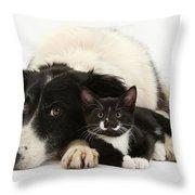 Border Collie And Tuxedo Kitten Throw Pillow