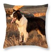 Border Collie At Sunset Throw Pillow