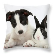 Border Collie Pup And Dutch Rabbit Throw Pillow