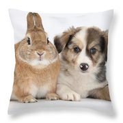 Border Collie Pup And Sandy Throw Pillow