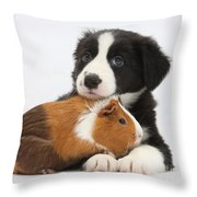 Border Collie Pup And Tricolor Guinea Throw Pillow