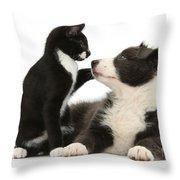 Border Collie Pup And Tuxedo Kitten Throw Pillow