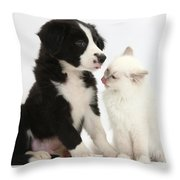 Border Collie Pup And White Kitten Throw Pillow
