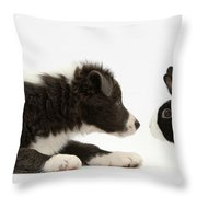 Border Collie Puppy And Rabbit Throw Pillow