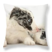 Border Collie Puppy With Rough-haired Throw Pillow
