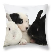 Border Collie Pups With Black Rabbit Throw Pillow