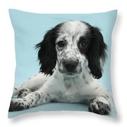 Border Collie X Cocker Spaniel Puppy Throw Pillow