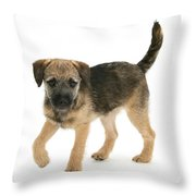 Border Terrier Puppy Throw Pillow