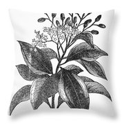 Botany: Cinnamon Tree Throw Pillow
