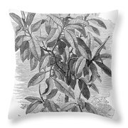 Botany: Ficus Elastica Throw Pillow