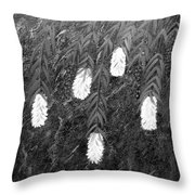 Bottlebrush Plant B W Throw Pillow