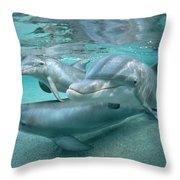 Bottlenose Dolphin Underwater Trio Throw Pillow