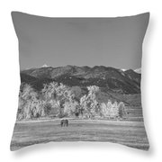 Boulder County Colorado Front Range Panorama With Horses Bw Throw Pillow