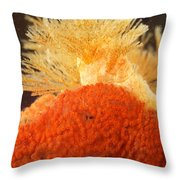 Bowerbanks Halichondria & Spiral-tufted Throw Pillow by Ted Kinsman