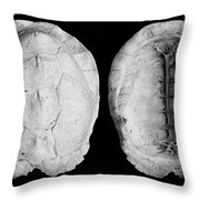 Box Turtle Shell Throw Pillow