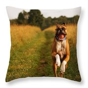 Boxer Dog Running Happily Through Field Throw Pillow by Stephanie McDowell