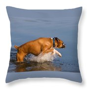 Boxer Playing In Water Throw Pillow