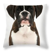 Boxer Pup Throw Pillow by Mark Taylor
