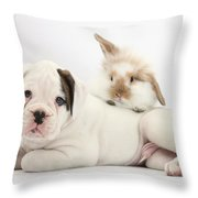 Boxer Puppy And Young Fluffy Rabbit Throw Pillow