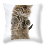 Boxing Kitten Throw Pillow