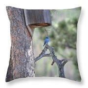 Boy Blue Throw Pillow